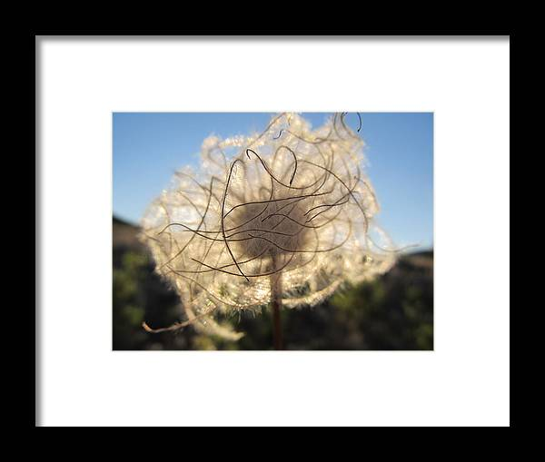 Wildflower Framed Print featuring the photograph Fuzzy by Jesse Woodward