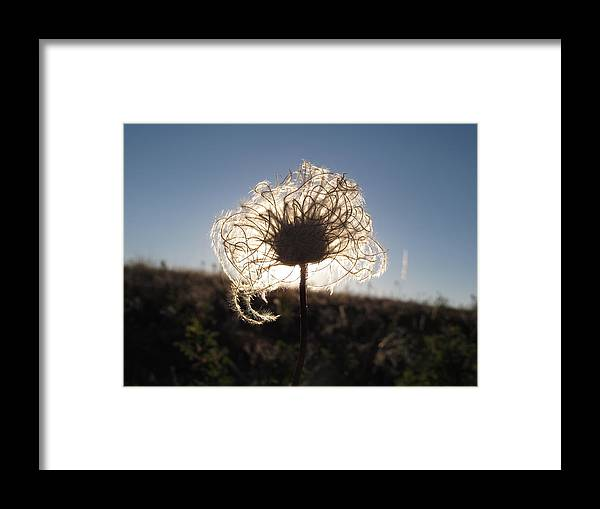 Flower Framed Print featuring the photograph Fuzzy Too by Jesse Woodward