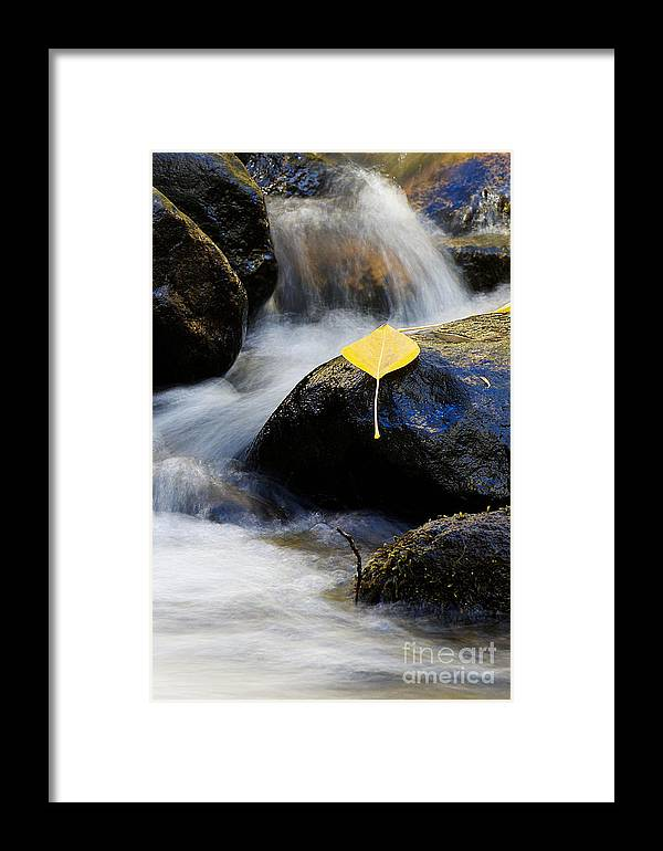 Nevada Framed Print featuring the photograph Galena Creek Trail by Vinnie Oakes