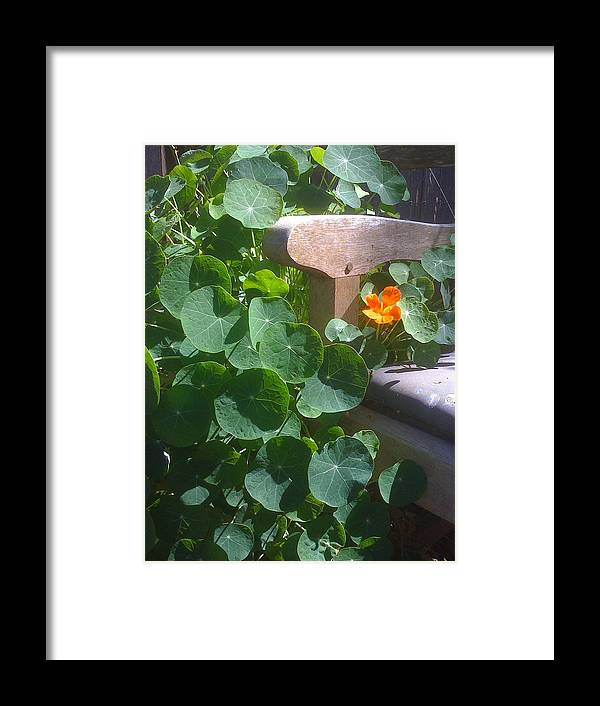 Bench Framed Print featuring the photograph Garden Bench by Karen j Kobrin Cohen