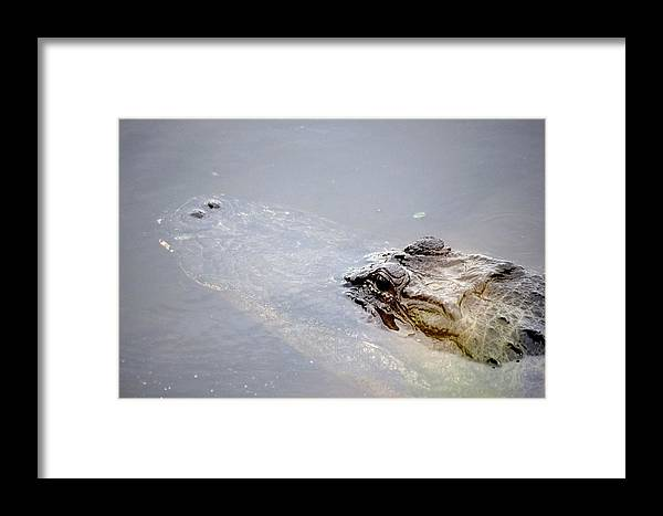 Alligator Framed Print featuring the photograph Gator Profile 1 by Sheri McLeroy