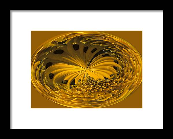 Abstract Framed Print featuring the photograph Gazania Abstract by Keith Gondron