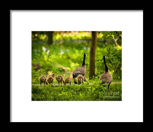 Canadian Geese Framed Print featuring the photograph Geese Family by Michael Shake