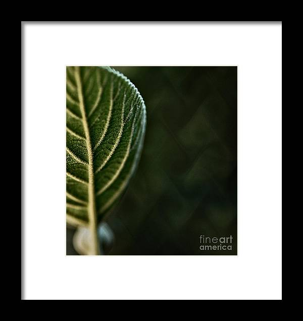 Genetic Fabric Framed Print featuring the photograph Genetic Fabric by Chris Fleming
