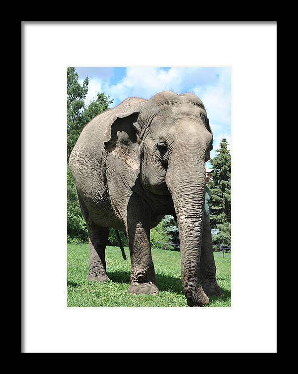 Framed Print featuring the photograph Gentle Giant by Jim Hogg