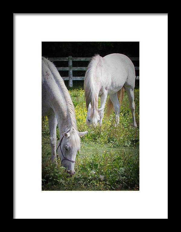 Horses Framed Print featuring the photograph Gentle Grazing by Teresa Wells