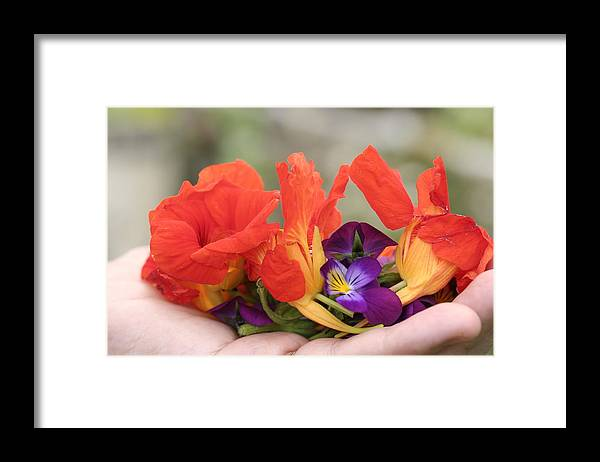 Flower Petals Framed Print featuring the photograph Gently Held Flowers by Dr Carolyn Reinhart