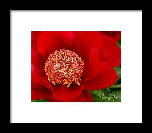 Red Framed Print featuring the photograph Georgia by Valerie Fuqua