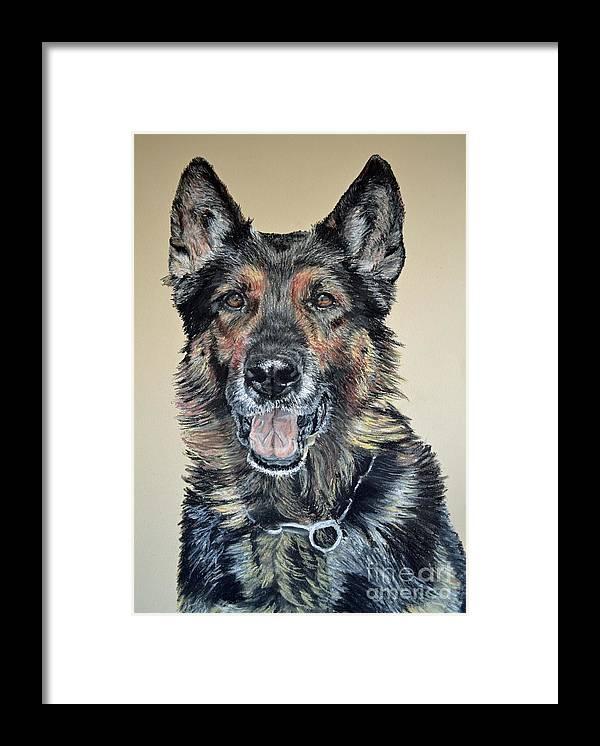 Schutzhund Framed Print featuring the pastel German Shepherd Jim by Ann Marie Chaffin