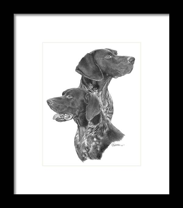 Pencil Drawing Print Framed Print featuring the drawing German Short-hair Pointer by Joe Olivares