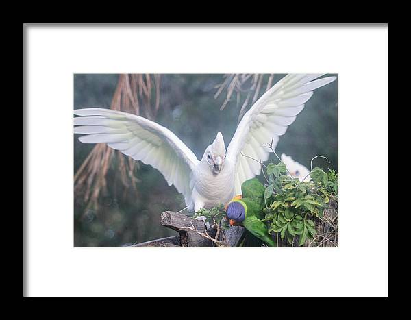 Birds Framed Print featuring the photograph Get Off by Michael Podesta