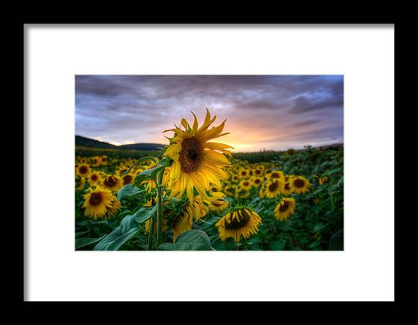 Sommer Framed Print featuring the pyrography Get Sun by Steffen Gierok
