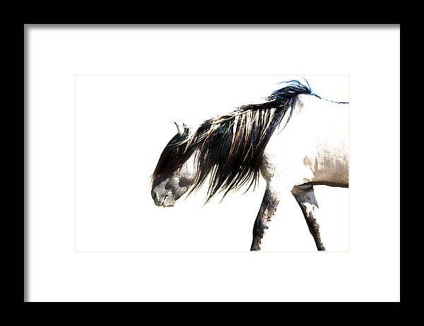 Sundowner Framed Print featuring the photograph Ghost Horse by Lourie Zipf