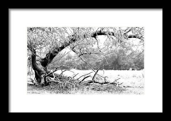 Tree Framed Print featuring the photograph Ghost Tree 1 Of 3 by Lori Reeths