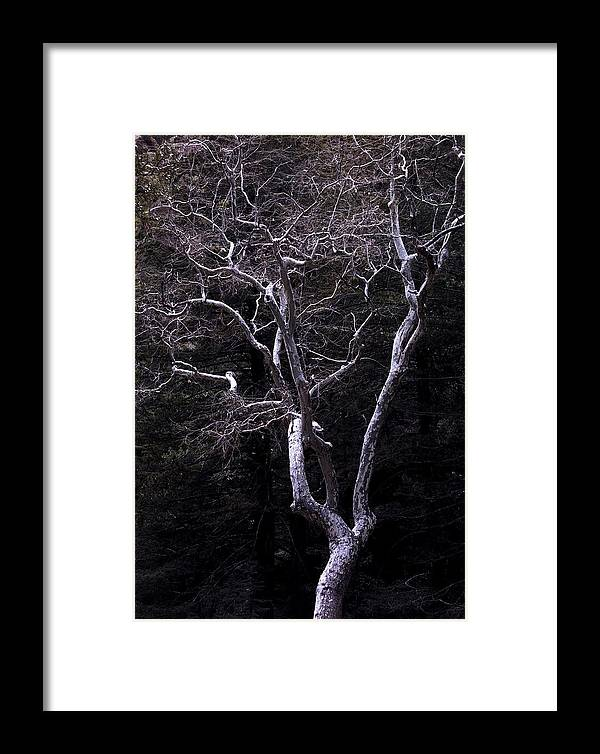 Landscape Framed Print featuring the photograph Ghost Tree by Kae Cheatham