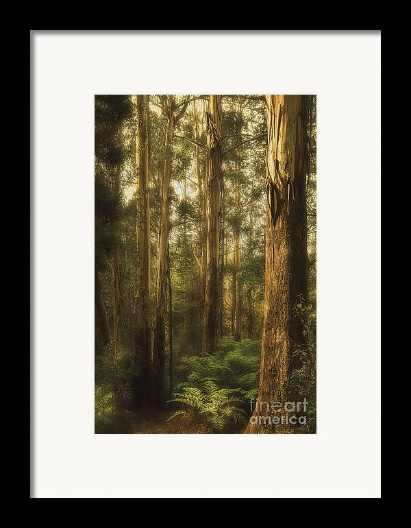 Gum Framed Print featuring the photograph Ghostly by Andrew Paranavitana