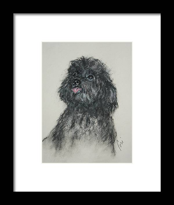 Poodle Framed Print featuring the drawing Gigi by Cori Solomon