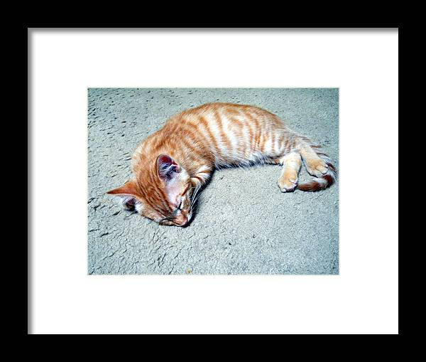 Cat Framed Print featuring the photograph Ginger Sleeps by Eric Forster