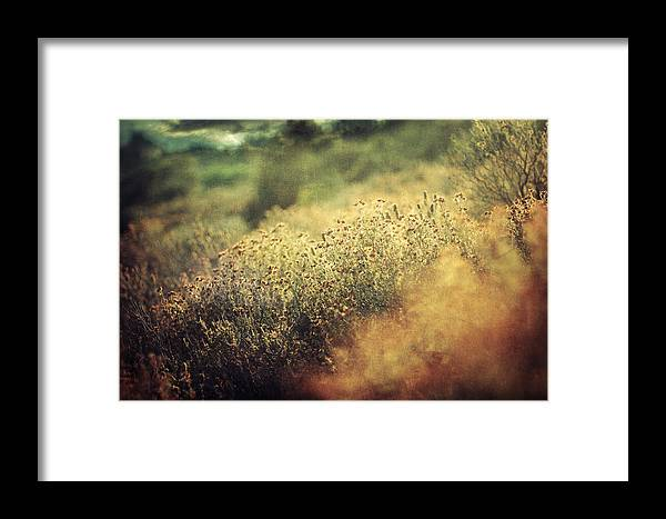Autumn Framed Print featuring the photograph Giorni by Zapista