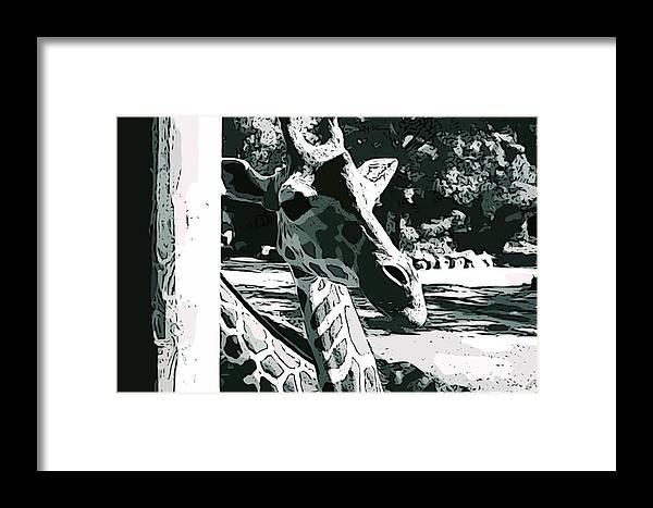 Giraffe Framed Print featuring the photograph Giraffe Closeup by Tamara Gantt