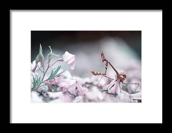 Macro Framed Print featuring the photograph Girl Bedroom by Fabien Bravin