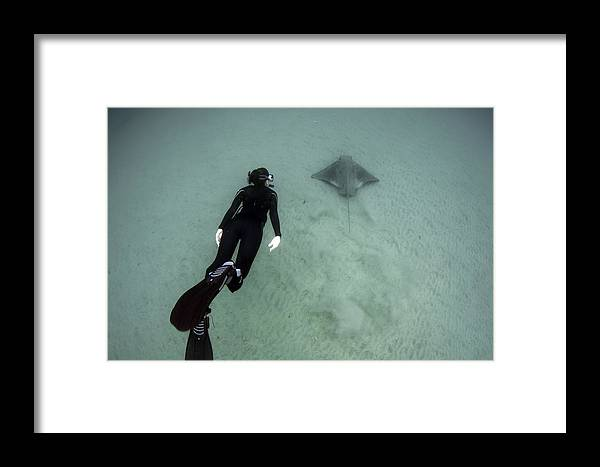 Diver Framed Print featuring the photograph Girl With Batray by Greg Amptman