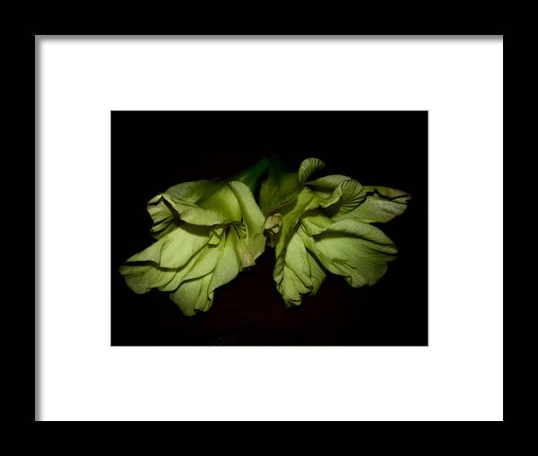 Gladiolus Framed Print featuring the photograph Gladiolus In Shadows by Paulina Roybal