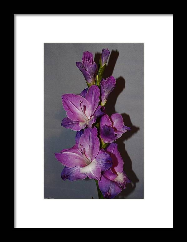 Flowers Framed Print featuring the photograph Gladiolus n shadows by Paulina Roybal