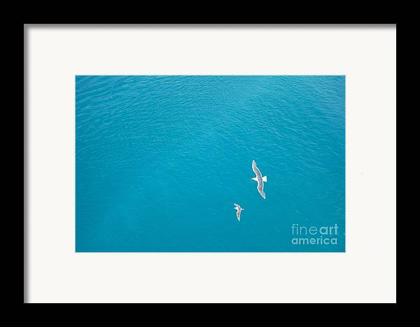 Birds Framed Print featuring the photograph Gliding Seagulls by Jacqueline Athmann