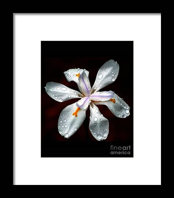 Iris Framed Print featuring the photograph Glisten by Angela Murray