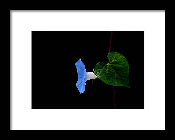 Tennessee Wildflowers Framed Print featuring the photograph Glorious by Jolie Bell