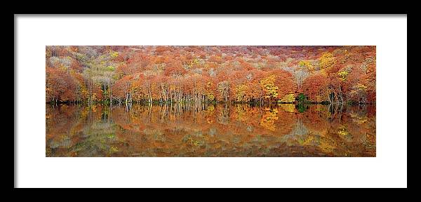 Landscape Framed Print featuring the photograph Glowing Autumn by Sho Shibata