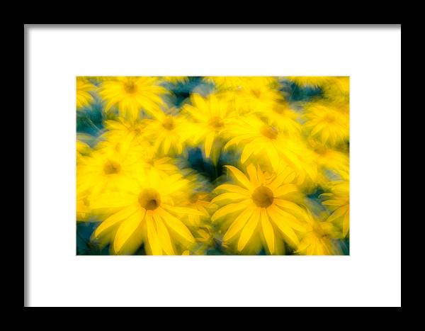 Beautiful Framed Print featuring the photograph Glowing Blossoms Black Eyed Susans by Rob Huntley