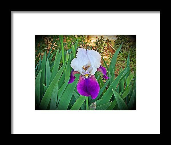 Framed Print featuring the photograph Glowing Sunday Morning by Regina McLeroy