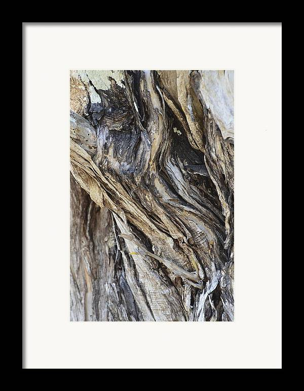 Tree Framed Print featuring the photograph Gnarly by AnnaJo Vahle