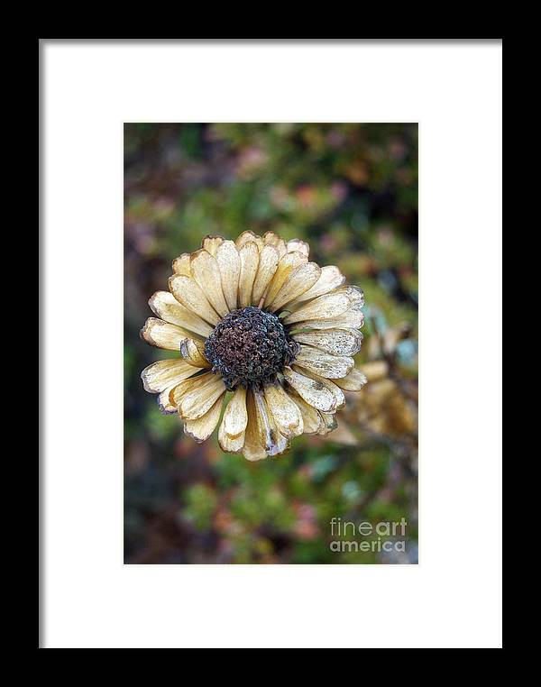 Pictures Of Flowers Framed Print featuring the photograph Going To Seed by Skip Willits