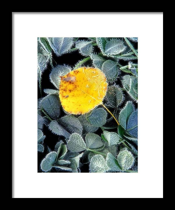 First Frost Framed Print featuring the photograph Gold On Green by Bill Morgenstern
