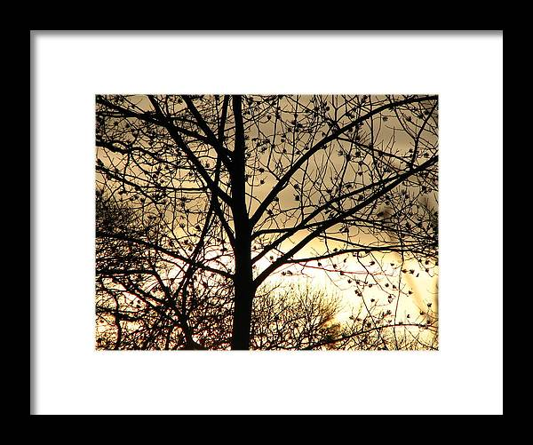 Trees Framed Print featuring the photograph Gold Sunset by Roxy Riou