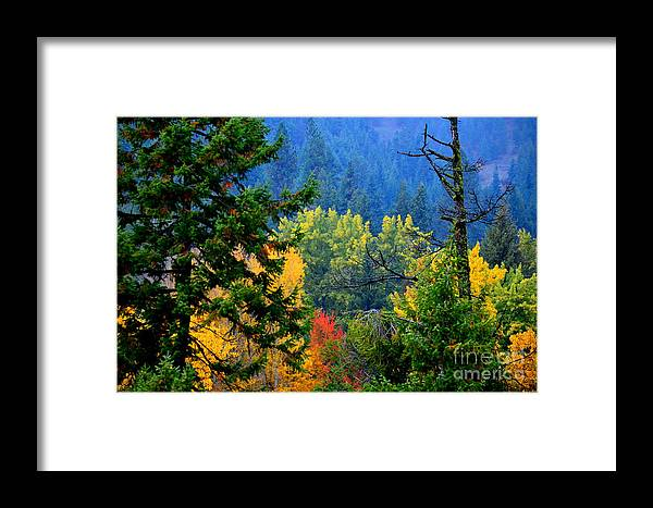 Patzer Framed Print featuring the photograph Gold Zen by Greg Patzer
