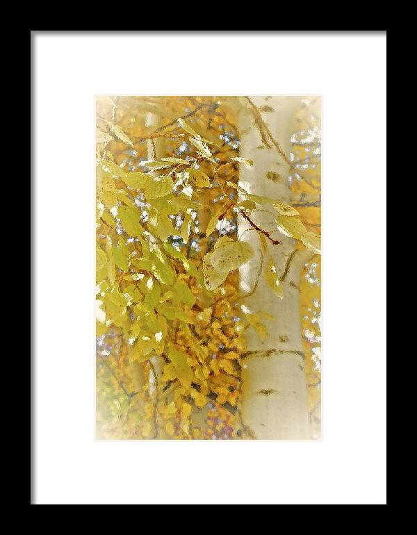 Nature Framed Print featuring the photograph Golden Aspens by Peter SPAGNUOLO
