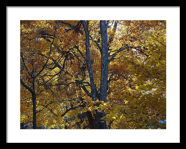 Autumn Framed Print featuring the photograph Golden Autumn Foliage At Palenville In October by Terrance DePietro