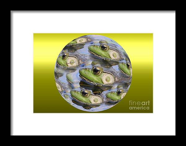 Frog Framed Print featuring the photograph Golden Eye by Rick Rauzi