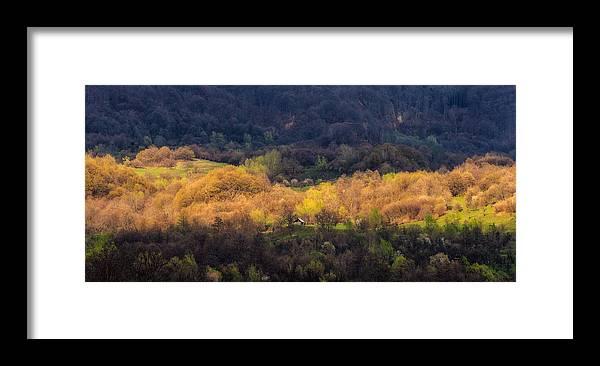 Forest Framed Print featuring the photograph Golden Forest by Alexandru Bobica