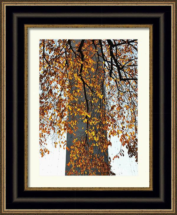 Golden Leaves In Mt Vernon by Marcus Dagan