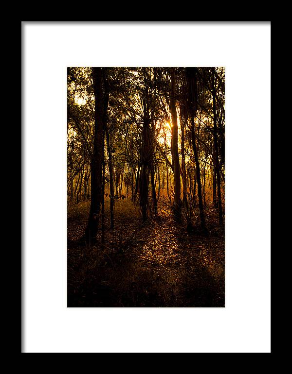 Tree Framed Print featuring the photograph Golden Light In Darwin by Zoe Ferrie