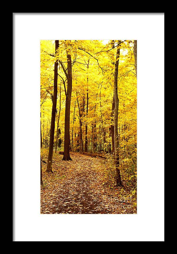 Autumn Framed Print featuring the photograph Golden Path by Valerie Fuqua