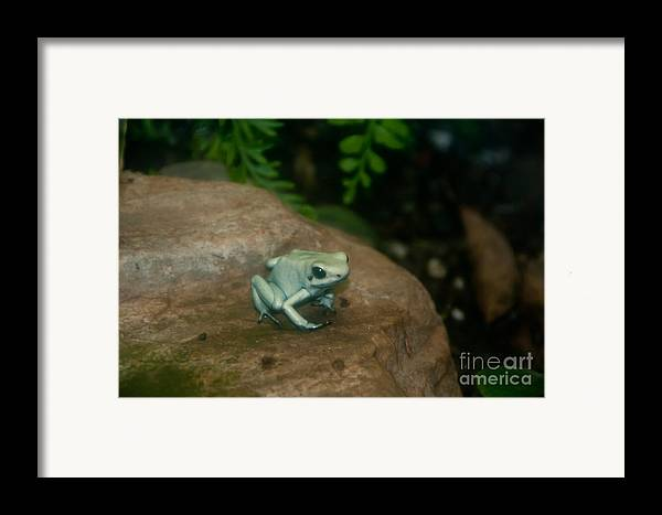 Nature Framed Print featuring the photograph Golden Poison Frog Mint Green Morph by Mark Newman