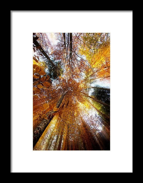 Autumn Framed Print featuring the photograph Golden Rays by Ivan Vukelic