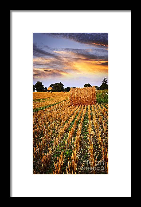 Farm Framed Print featuring the photograph Golden Sunset Over Farm Field In Ontario by Elena Elisseeva