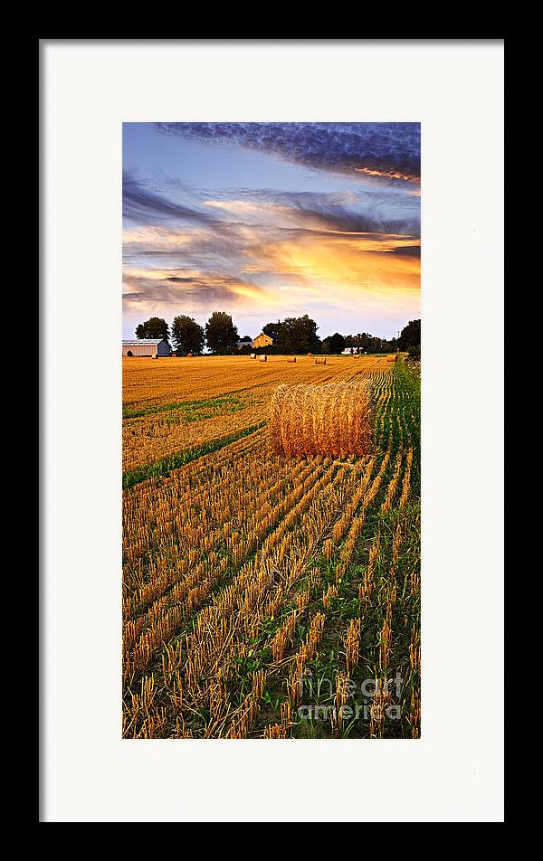Farm Framed Print featuring the photograph Golden Sunset Over Farm Field With Hay Bales by Elena Elisseeva
